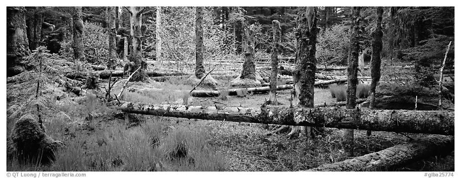 Temperate rainforest scenery. Glacier Bay National Park (black and white)