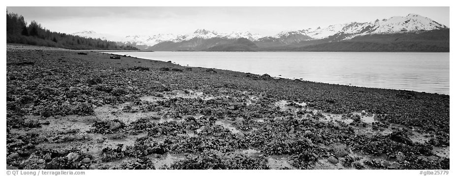 Shore with seaweed uncovered by low tide. Glacier Bay National Park (black and white)