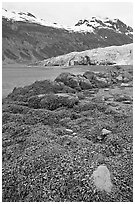 Beach with seaweed exposed at low tide in Reid Inlet. Glacier Bay National Park ( black and white)