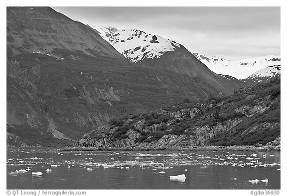 Ice-chocked cove in Tarr Inlet. Glacier Bay National Park (black and white)