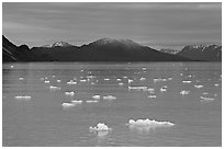 Icebergs and last light on mountain, Tarr Inlet, sunset. Glacier Bay National Park, Alaska, USA. (black and white)