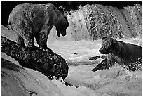Brown bears fishing at the Brooks falls. Katmai National Park, Alaska, USA. (black and white)
