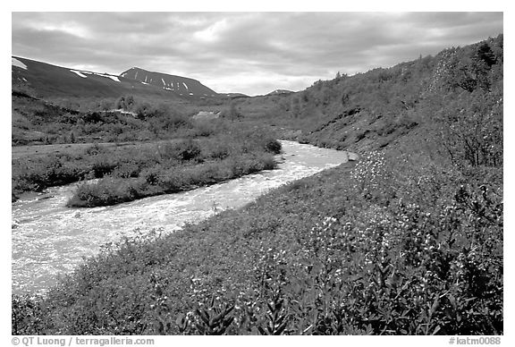 Wildflowers and Lethe river at the edge of the Valley of Ten Thousand smokes. Katmai National Park (black and white)