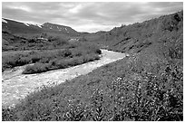 Wildflowers and Lethe river at the edge of the Valley of Ten Thousand smokes. Katmai National Park ( black and white)