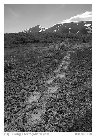 Big bear tracks in the ash, Valley of Ten Thousand smokes. Katmai National Park (black and white)