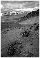 Wildflowers grow on ash at the limit of the Valley of Ten Thousand smokes. Katmai National Park, Alaska, USA. (black and white)