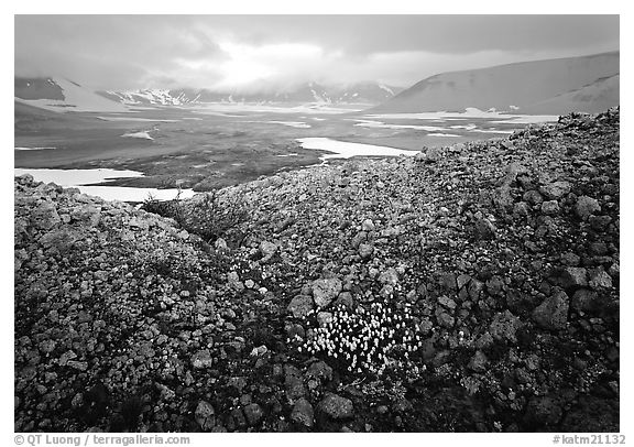 Wildflowers, pumice, and distant peaks in storm, Valley of Ten Thousand smokes. Katmai National Park (black and white)