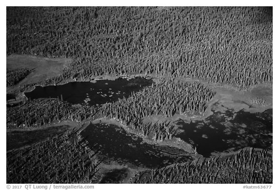 Aerial View of forest and ponds. Katmai National Park (black and white)