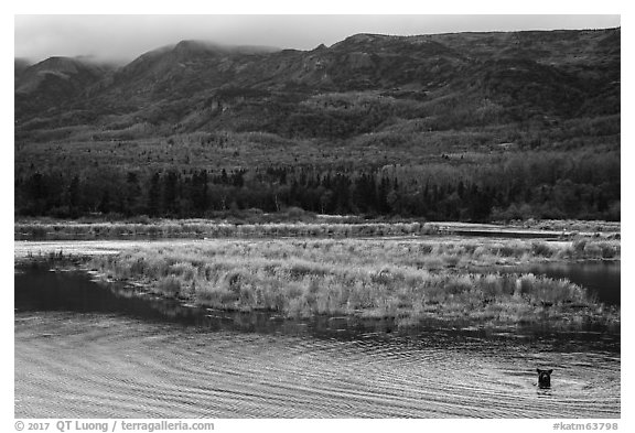 Bear in Brooks River and Dumpling Mountain. Katmai National Park (black and white)