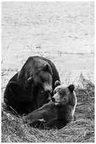 Sow and grizzly bear cub. Katmai National Park ( black and white)
