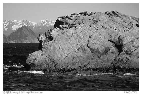 Rock with cormorant and sea lions in Aialik Bay. Kenai Fjords National Park (black and white)
