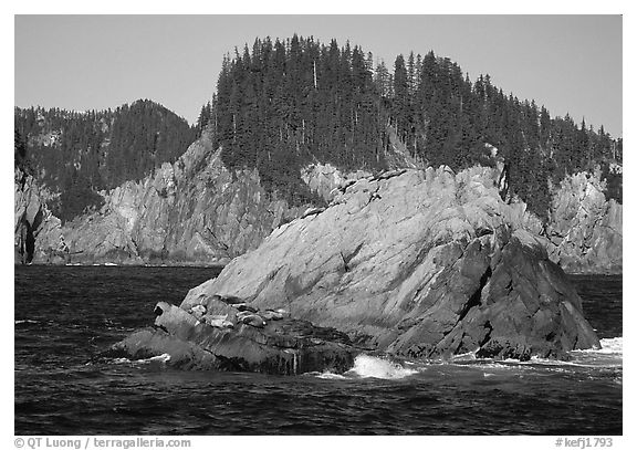 Sea lions on rock in Aialik Bay. Kenai Fjords National Park (black and white)