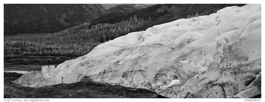 Glacier and trees in autumn color. Kenai Fjords National Park (black and white)