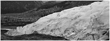 Glacier and trees in autumn color. Kenai Fjords  National Park (Panoramic black and white)