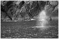Whale spouting. Kenai Fjords National Park, Alaska, USA. (black and white)