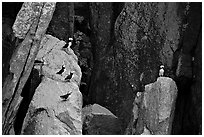 Puffins on cliff. Kenai Fjords National Park, Alaska, USA. (black and white)