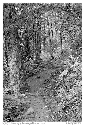 Harding Icefield trail passing through a young forest. Kenai Fjords National Park (black and white)