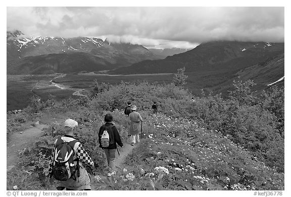 Hikers surrounded by wildflowers on Harding Icefield trail. Kenai Fjords National Park (black and white)