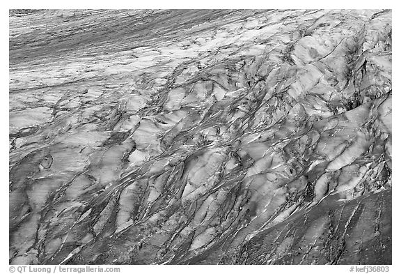 Crevassed Exit glacier section. Kenai Fjords National Park (black and white)