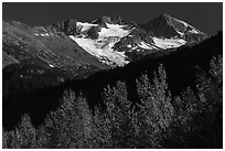 Trees in autumn and glaciers on Phoenix Peak. Kenai Fjords National Park ( black and white)