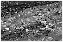Glacial stream and icebergs. Kenai Fjords National Park ( black and white)