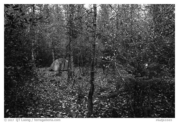 Campground. Kenai Fjords National Park (black and white)