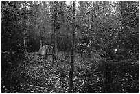 Campground. Kenai Fjords National Park ( black and white)