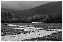 Stream and trees in autumn foliage, Exit Glacier outwash plain. Kenai Fjords National Park ( black and white)