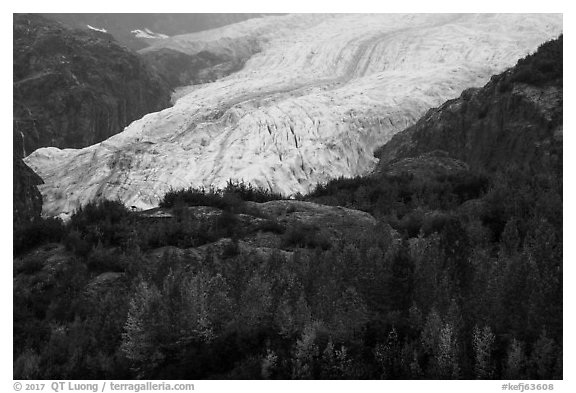 Trees in fall foliage and Exit Glacier. Kenai Fjords National Park (black and white)