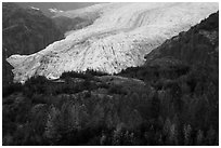Trees in fall foliage and Exit Glacier. Kenai Fjords National Park ( black and white)