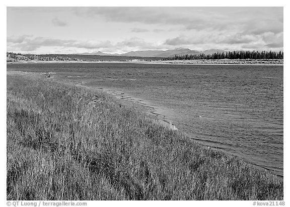Grasses and river. Kobuk Valley National Park (black and white)