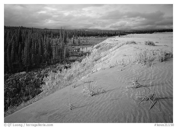 The edge of the Great Sand Dunes with the tundra and taiga below. Kobuk Valley National Park (black and white)
