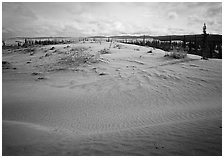 Dune field with boreal forest in the distance. Kobuk Valley National Park ( black and white)