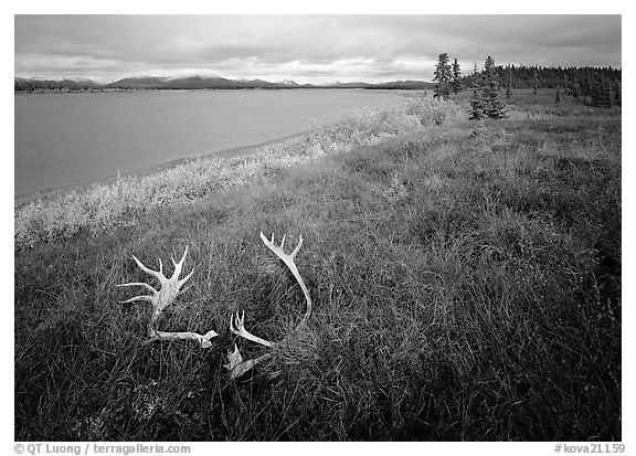 Caribou antlers, tundra, and river. Kobuk Valley National Park (black and white)