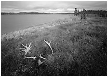 Caribou antlers, tundra in autumn color, and Kobuk River. Kobuk Valley National Park, Alaska, USA. (black and white)