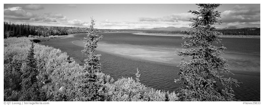 Northern river scenery seen through spruce trees. Kobuk Valley National Park (black and white)