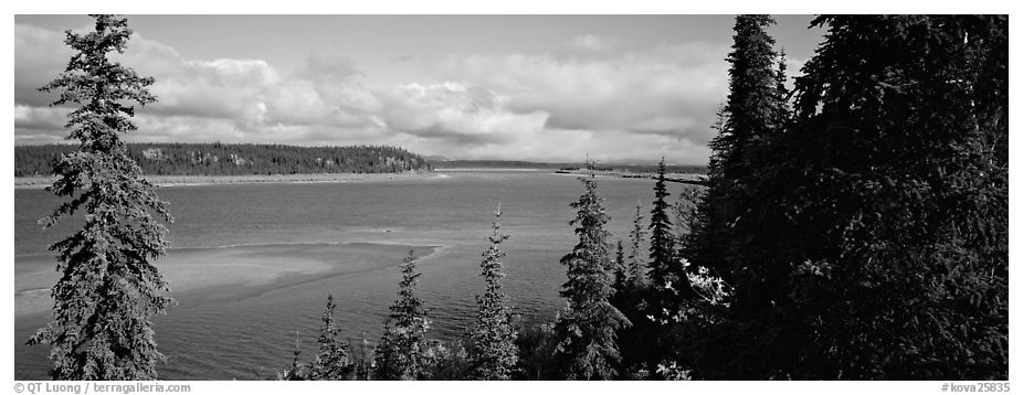 River landscape with forested riverbank. Kobuk Valley National Park (black and white)