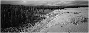 Sand dunes and boreal forest. Kobuk Valley National Park (Panoramic black and white)