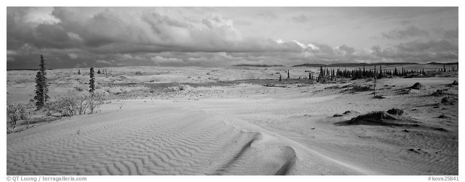 Sand dunes with spruce trees. Kobuk Valley National Park (black and white)