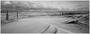 Sand dunes with spruce trees. Kobuk Valley National Park (Panoramic black and white)