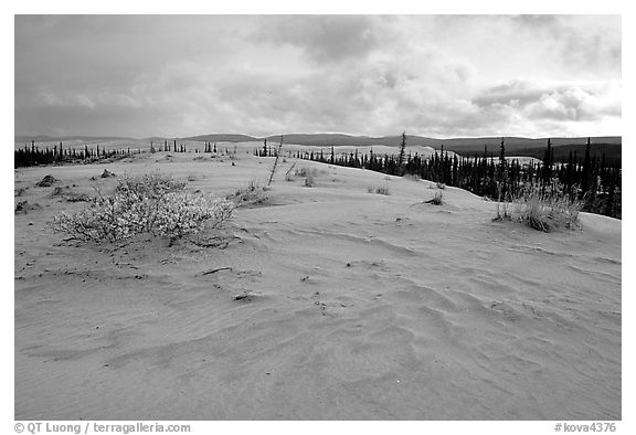 Great Sand Dunes and boreal spruce forest. Kobuk Valley National Park (black and white)