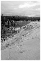 The edge of the Great Sand Dunes with the boreal taiga. Kobuk Valley National Park ( black and white)