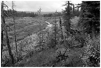 Autumn colors on boreal forest, Kavet Creek. Kobuk Valley National Park, Alaska, USA. (black and white)