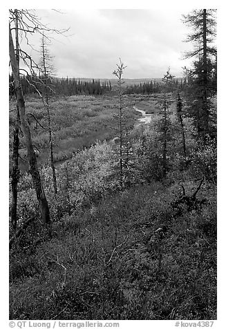 Autumn colors on Kavet Creek near the Great Sand Dunes. Kobuk Valley National Park (black and white)
