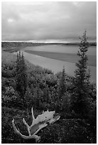 Antlers and bend of the Kobuk River, evening. Kobuk Valley National Park, Alaska, USA. (black and white)