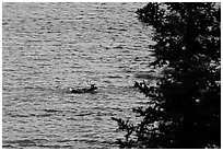 Spruce and lone caribou swimming across the river. Kobuk Valley National Park ( black and white)