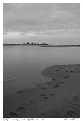 Caribou tracks on  shore of Kobuk River, evening. Kobuk Valley National Park (black and white)