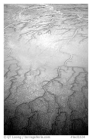 Aerial view of mud flat dendritic pattern on Cook inlet. Lake Clark National Park (black and white)