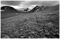 Green valley with alpine wildflowers and snow-clad peaks. Lake Clark National Park ( black and white)