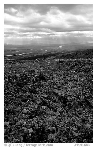 Tundra with forget-me-nots and stormy skies. Lake Clark National Park (black and white)